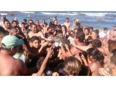 Туристы затискали дельфиненка до смерти